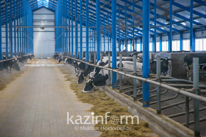 Value of agricultural output, services grows in Kazakhstan
