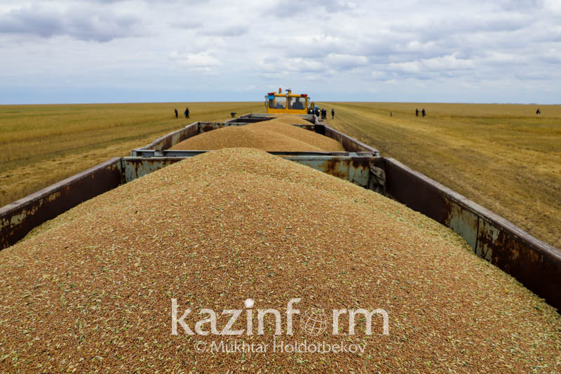 Kostanay rgn harvested 43% of grain crops