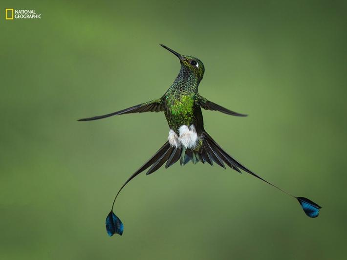 Лучшие снимки природы с фотоконкурса National Geographic