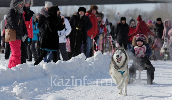 Астанадағы хаски жарыстары