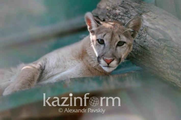 Уникальные животные Алматинского зоопарка