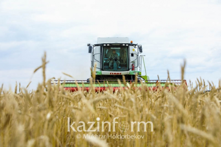 Harvest campaign in full swing in Kazakhstan