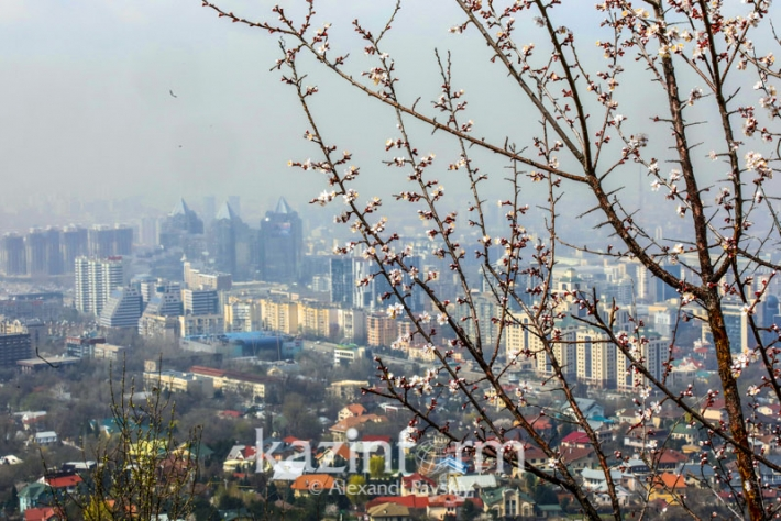 Яркие краски весны в Алматы
